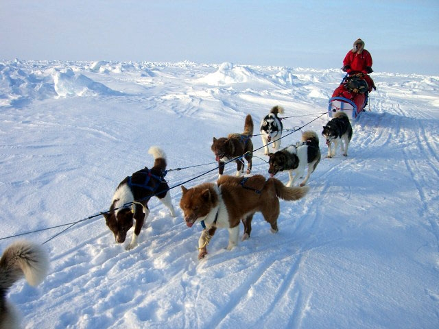 north_pole_dogsled_expedition